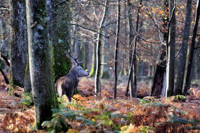 Dans les bois du val d'Allier