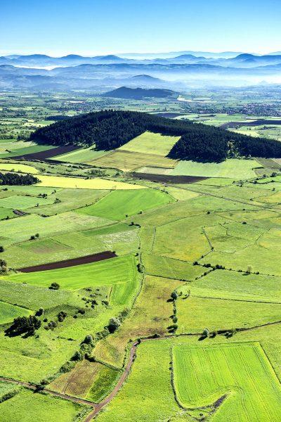 Les champs du Deves semés de lentilles vertes du Puy