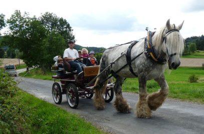Balade en calèche – Histoires d'ânes