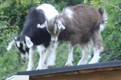 Histoires d'ânes – Visite de la ferme