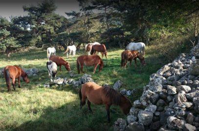 Centre Equestre les Petits Chevaux – Equitation