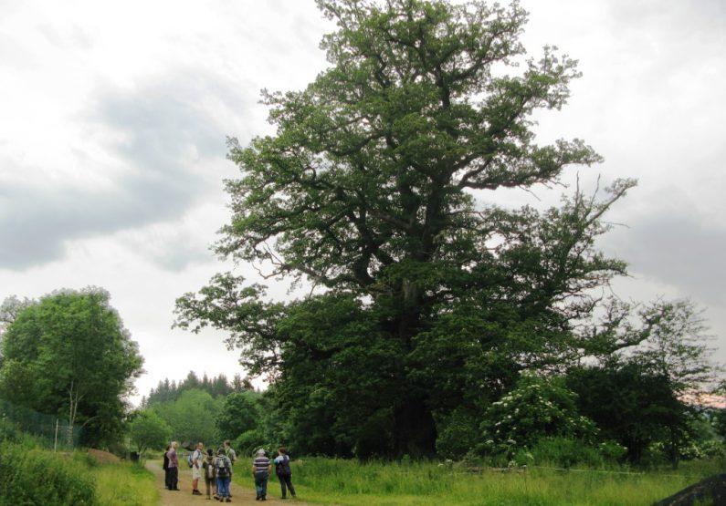 EQUI_PR 614 – La Roche Martine_arbre centenaire