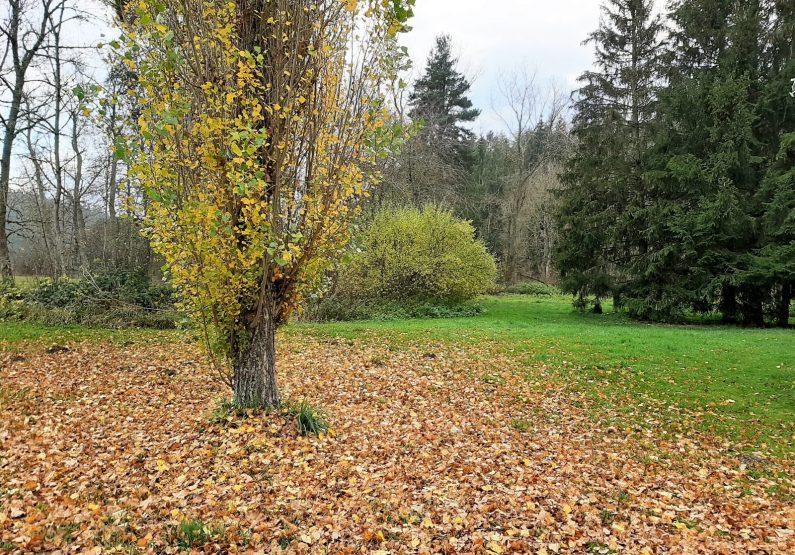HEB_Logement C4 – Les Gîtes de Bois de Chelles_extérieur