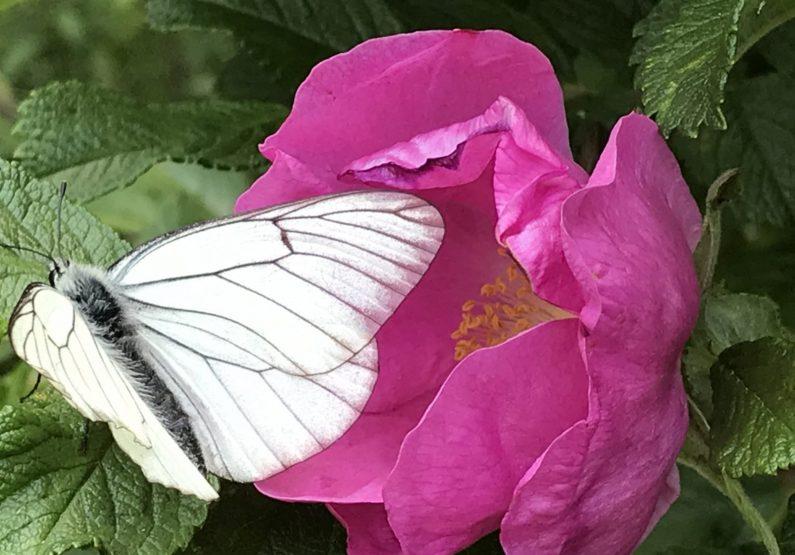 ACT_Découverte de jardins en agroforesterie_GebNout_fleur