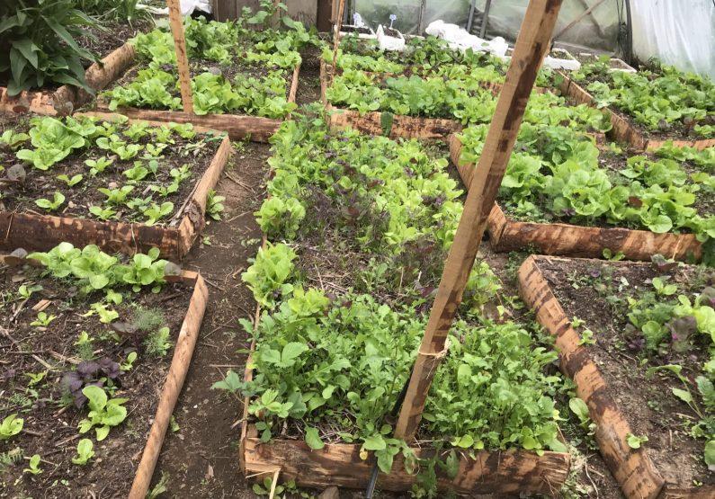 ACT_Découverte de jardins en agroforesterie_GebNout_jardins