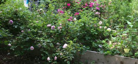 Découverte de jardins en agroforesterie