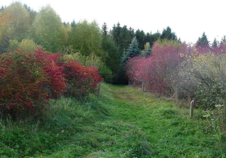 EQUI_PR 103 – Folgoux et l'arboretum_arboretum bis